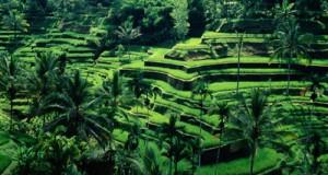 voyage-indonesie.jpg